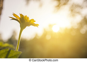 small flower under evening sun ligh
