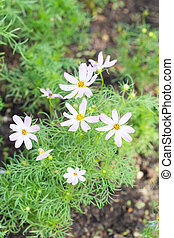 Small flowers bloom in farms.