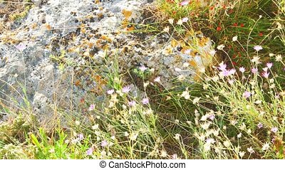 Small flowers fluttering in the wind. Cremean peninsula
