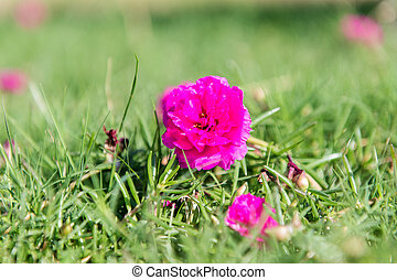 small flowers in green grass