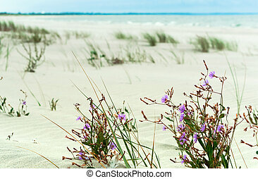 purple flowers on the beach