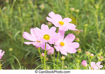 Small flowers pink