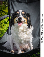 dog sitting on a folding chair in the garden