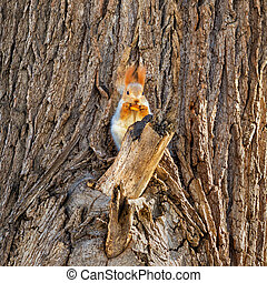 small fluffy squirrel eating pastry on tree