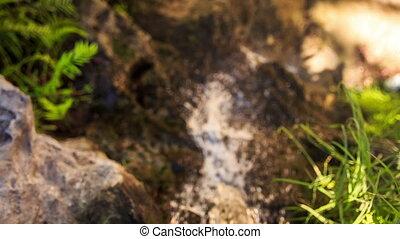 Small Foamy Stream among Rocks Green Grass in Park