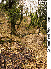 Small footpath in Forest at winter