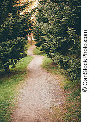 Small footpath in park between conifer trees