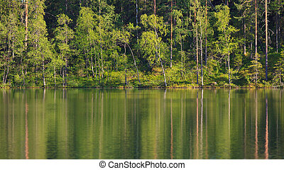 Small forest lake at summer