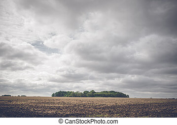 Small forest on a rural field