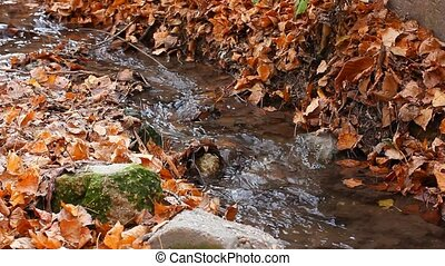 small forest river in autumn