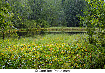 Small forest swamp at summer day.