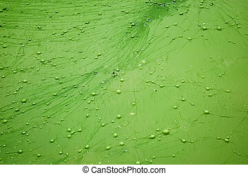 Small forest water algae pond surface, close-up
