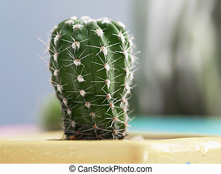 Small fresh and green succulent plant cactus on white wooden table, select focus shallow depth of field