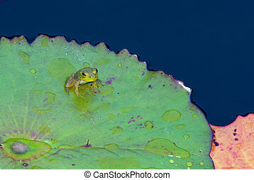 small frog on a lily pad