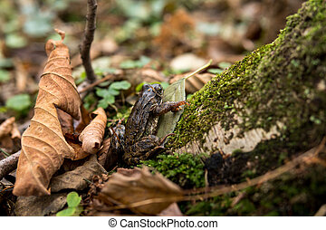 small frog sitting on a tree trunk