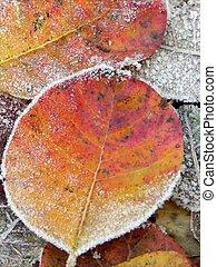 Small frozen leafs