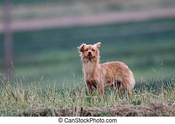 small funny dog
