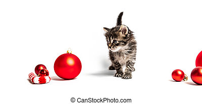 Small furry kitten with red balls