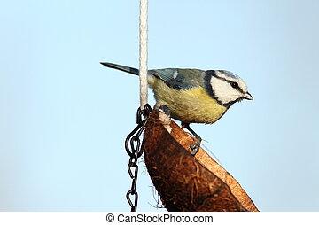 small garden bird
