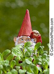 Small garden gnome behind borage plant - Small garden gnome...