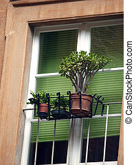 small garden on the window of the building in the city