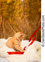 Small ginger tabby kitten playing with a red satin ribbon on a blanket in the park in nature