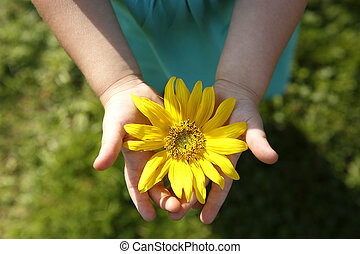 Small girl holds beautiful sunflower in her hands