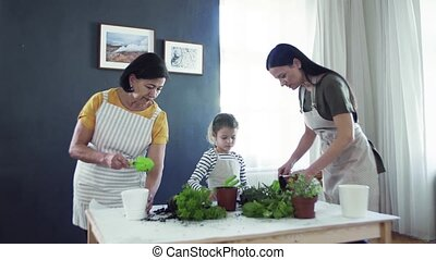 Small girl with mother and grandmother indoors at home,...