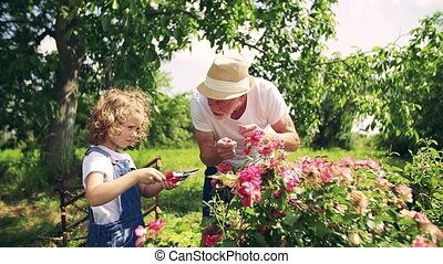 Small girl with senior grandfather gardening in the backyard...
