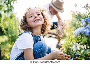 Small girl with senior grandfather in the backyard garden, gardening.