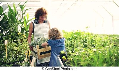 Small girl with senior grandmother gardening in the ...