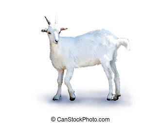 Small Goat isolated over white
