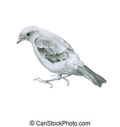Small gray bird. Isolated on a white background.