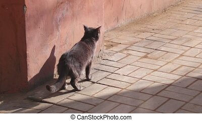 Small gray cat on the sidewalk on the footpath, lonely cute pet in the street