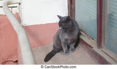 Small gray cat on the windowsill, lonely cute pet in the street