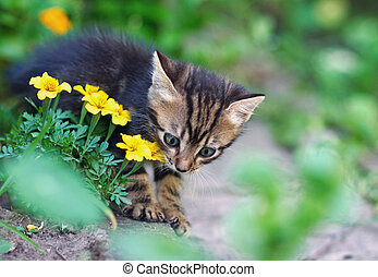 gray cat playing in yellow flowers
