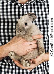 gray rabbit into the hands of men
