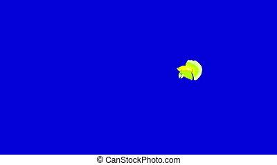 Small Green Aquarium cockerel fish Chroma Key - Green...