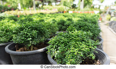 Small green bush tree