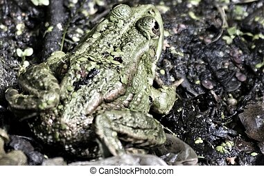 small green frog sitting on the shore