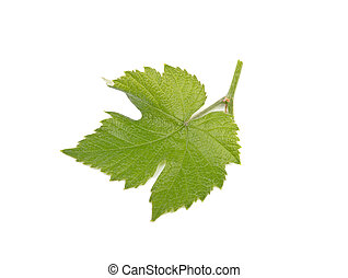 small green leaf of grapes isolated on white background