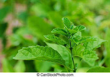 Small green leaf plant in the garden
