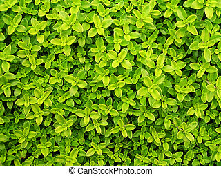 Small green leafs background