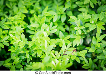small green leaves background