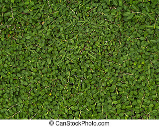 Small Green leaves background.