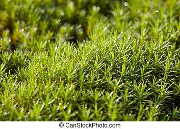 green moss after a rain