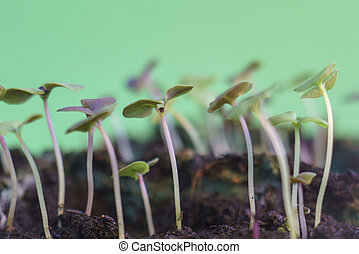small green plant growing in ground germinating from seeds springtime summer nature process