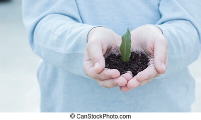 Small green plant in open hands. - Life in our hands. Motion...