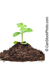 Small green seedling growing from soil