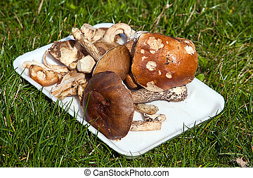 Small group of mushrooms